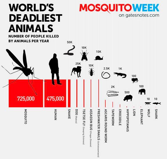 Mosquito00